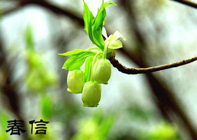 翌生美多菌酵酶原液:为春天注入活力