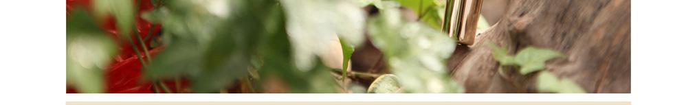 2013胶原蛋白化妆品|翌生美胶原臻蔲焕颜眼霜|补水抗皱|胶原蛋白护肤品32